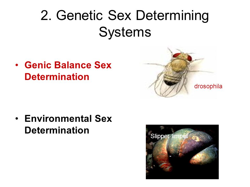 2. Genetic Sex Determining Systems