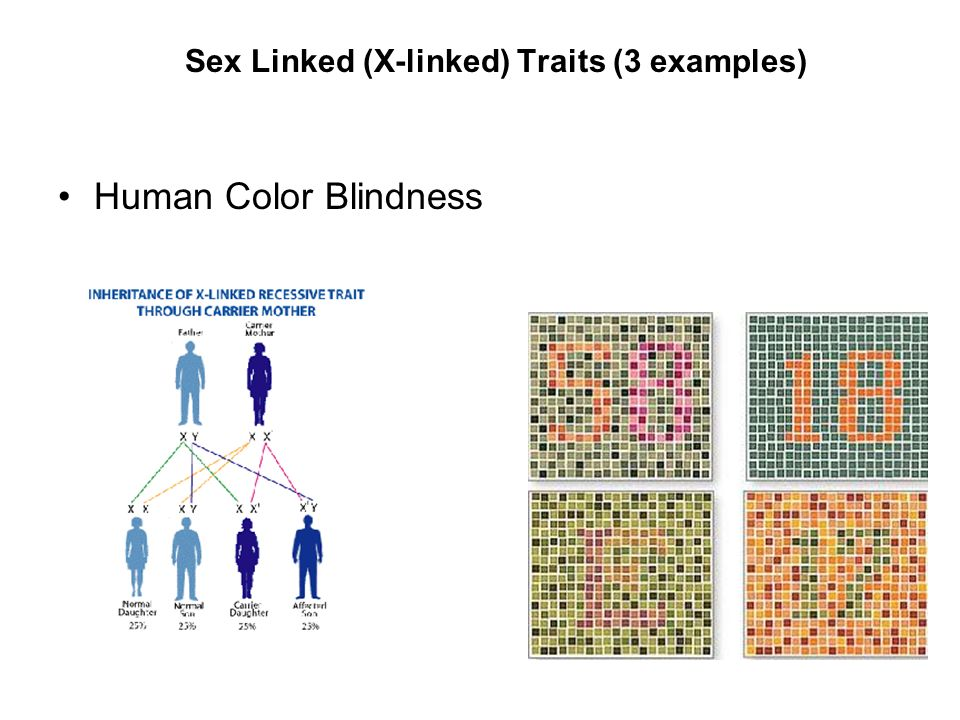 Sex Linked (X-linked) Traits (3 examples)