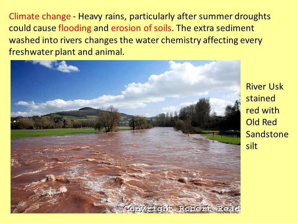 Climate change - Heavy rains, particularly after summer droughts could cause flooding and erosion of soils. The extra sediment washed into rivers changes the water chemistry affecting every freshwater plant and animal.