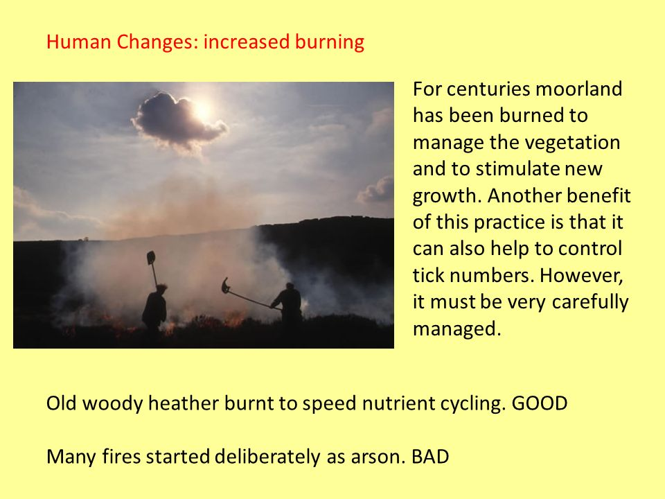 Human Changes: increased burning
