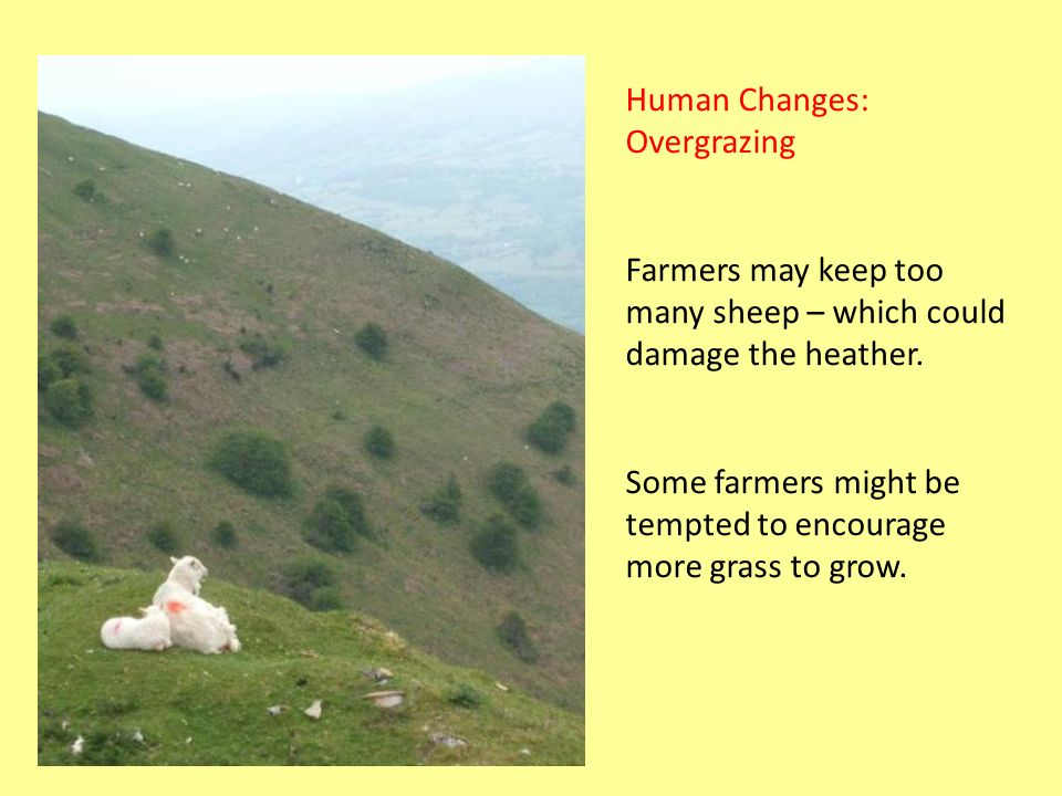Human Changes: Overgrazing