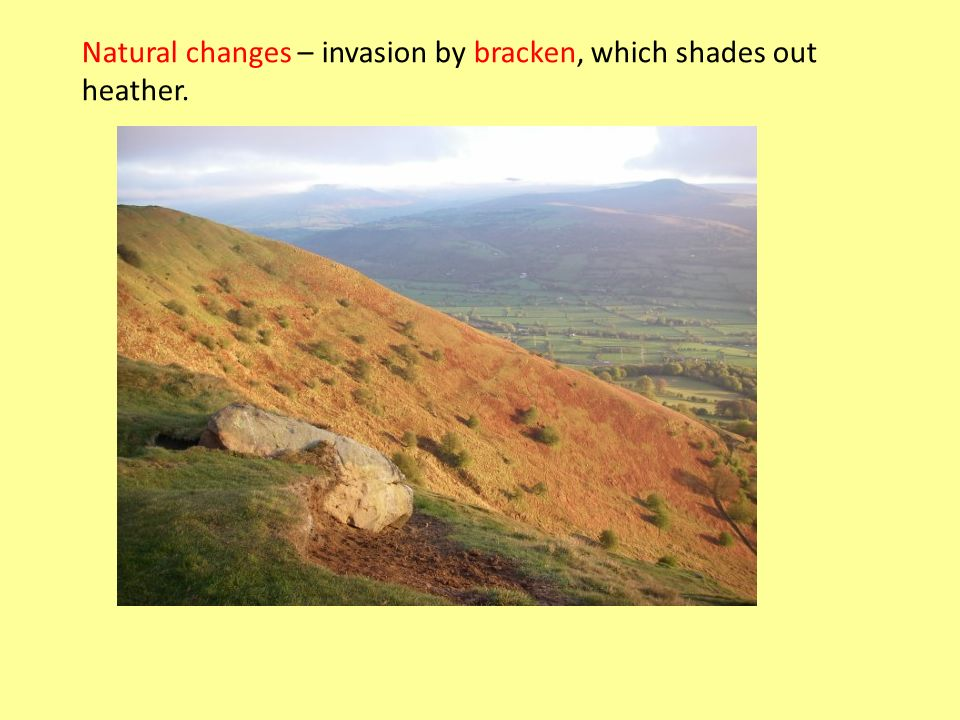 Natural changes – invasion by bracken, which shades out heather.