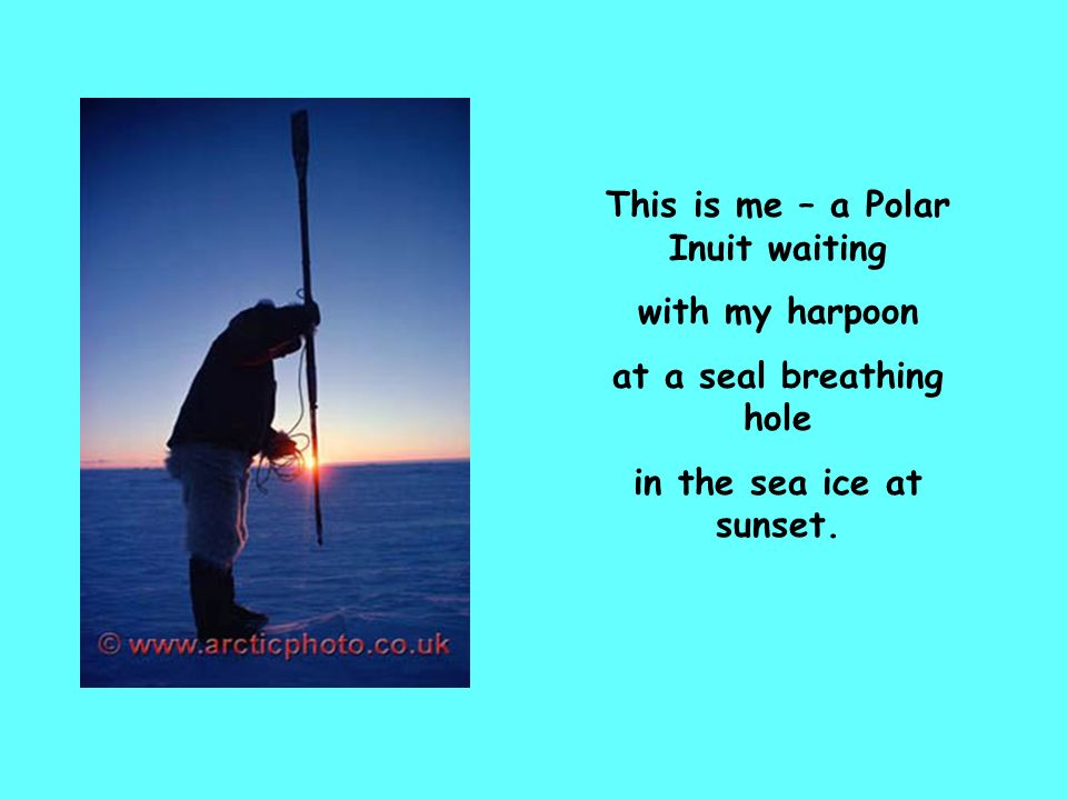 This is me – a Polar Inuit waiting at a seal breathing hole