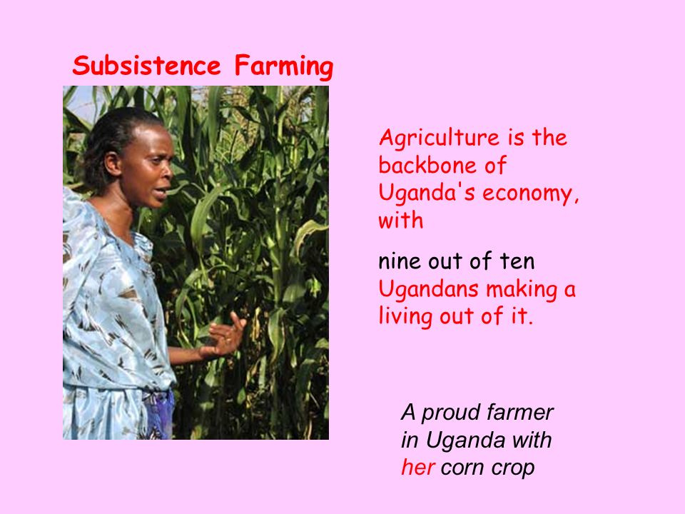 Subsistence Farming Agriculture is the backbone of Uganda s economy, with. nine out of ten Ugandans making a living out of it.