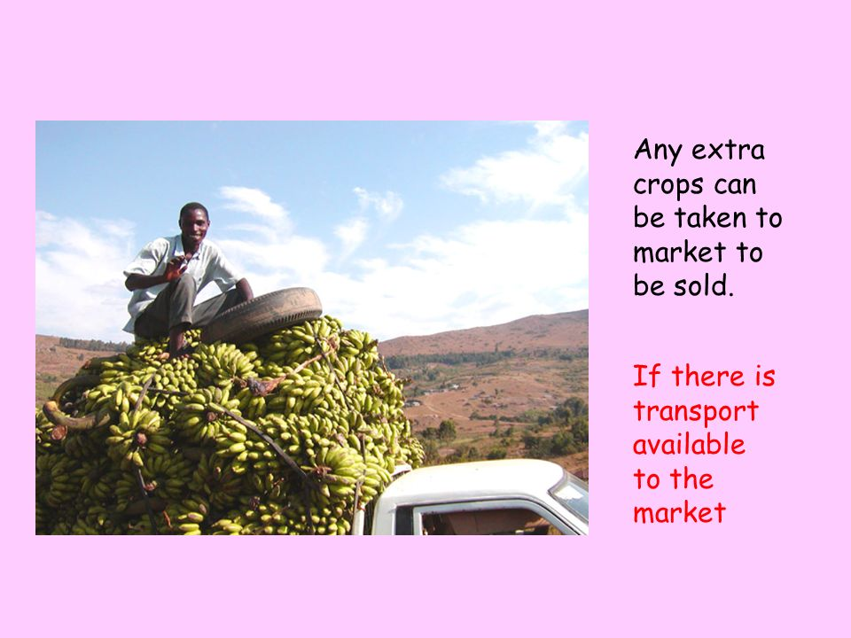 Any extra crops can be taken to market to be sold.