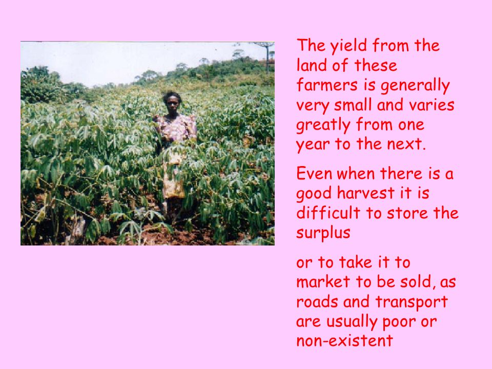 The yield from the land of these farmers is generally very small and varies greatly from one year to the next.
