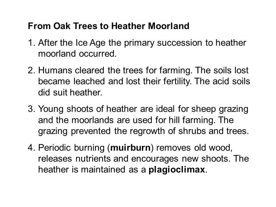 From Oak Trees to Heather Moorland