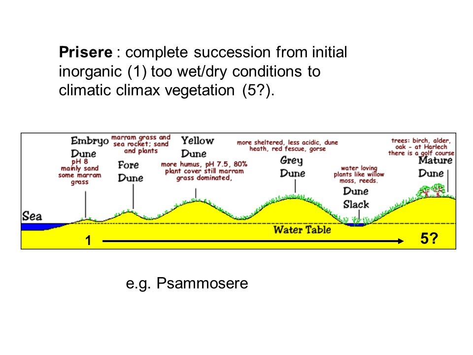 Prisere : complete succession from initial inorganic (1) too wet/dry conditions to climatic climax vegetation (5 ).