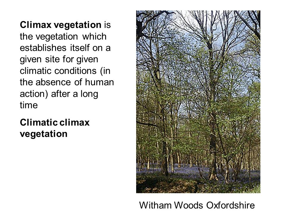Climax vegetation is the vegetation which establishes itself on a given site for given climatic conditions (in the absence of human action) after a long time