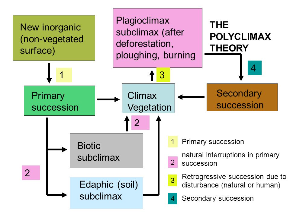Plagioclimax subclimax (after deforestation, ploughing, burning