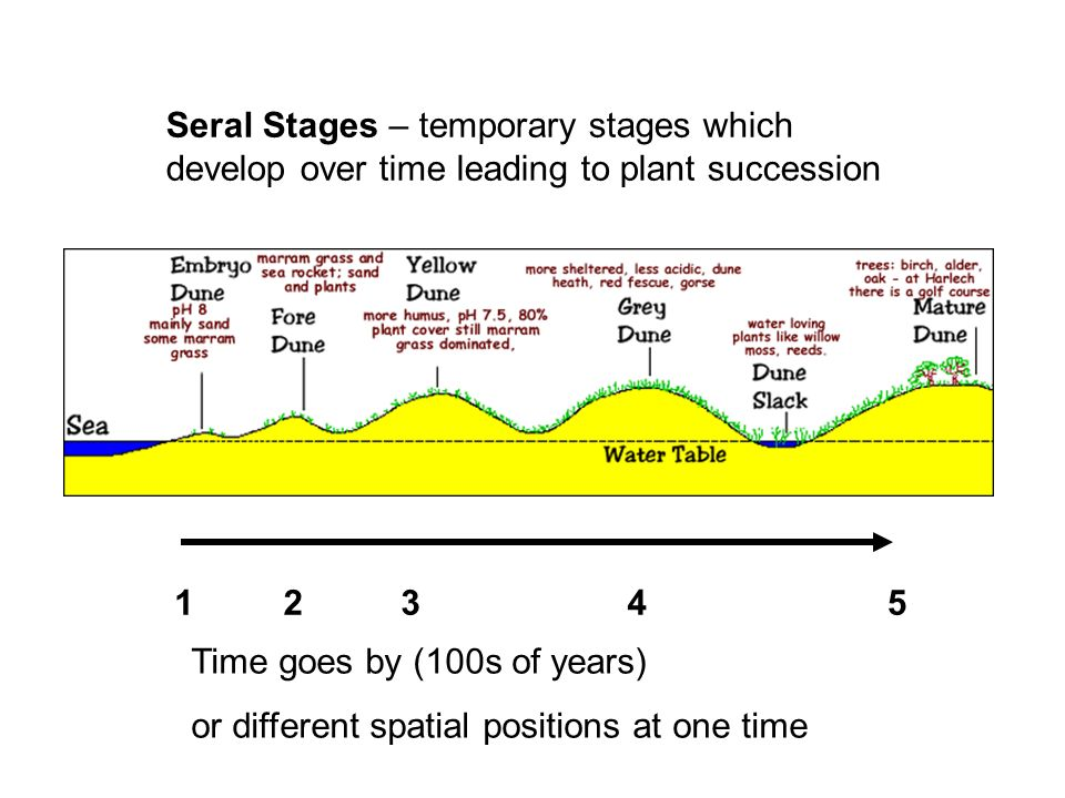 Seral Stages – temporary stages which develop over time leading to plant succession