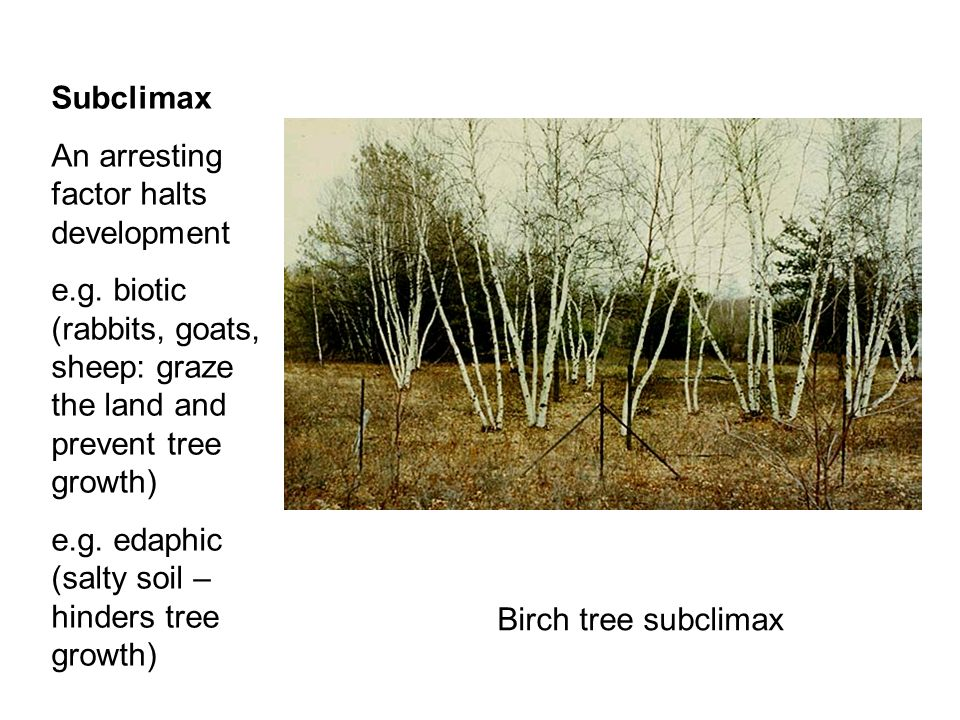 Subclimax An arresting factor halts development. e.g. biotic (rabbits, goats, sheep: graze the land and prevent tree growth)