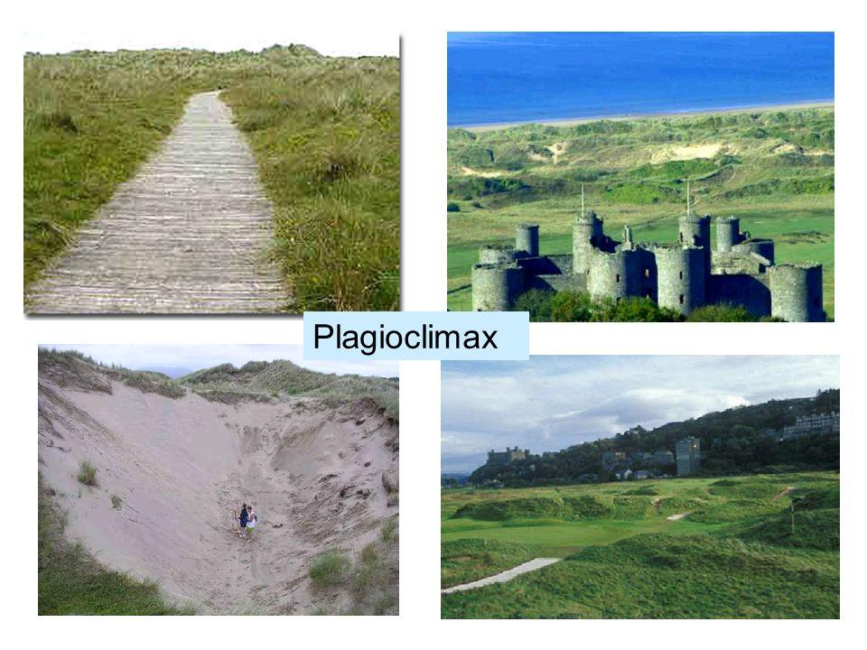 Plagioclimax