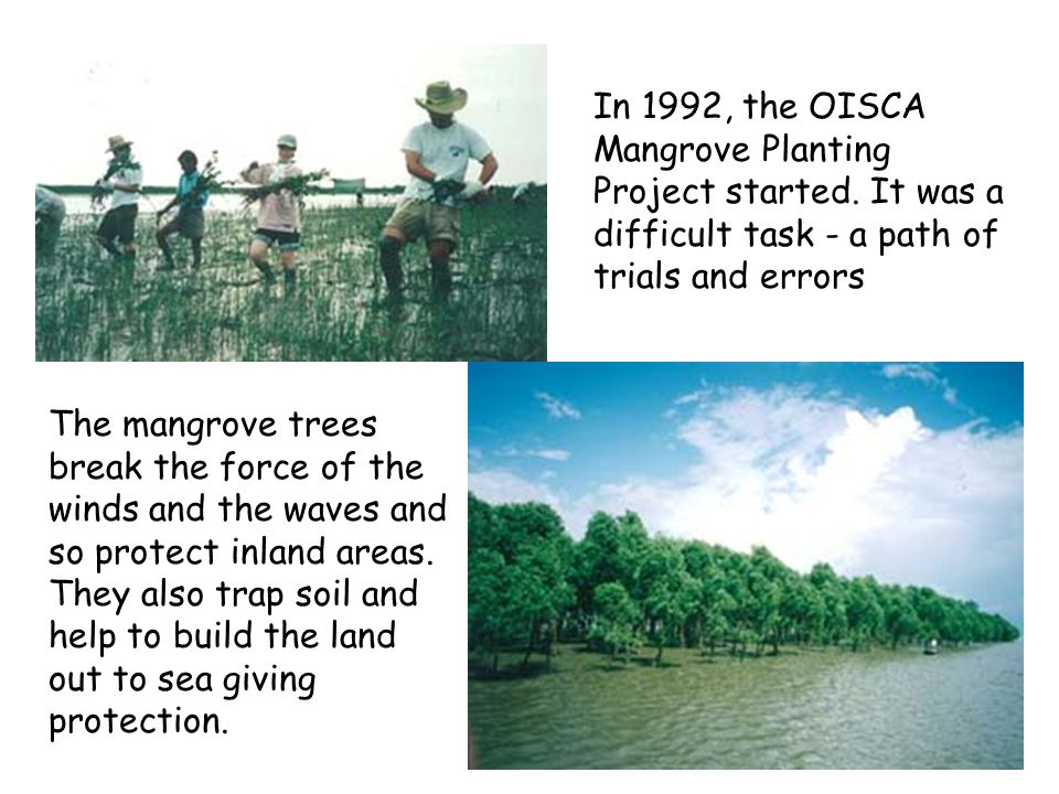 In 1992, the OISCA Mangrove Planting Project started