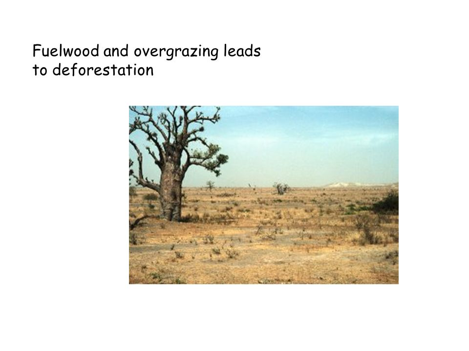 Fuelwood and overgrazing leads to deforestation