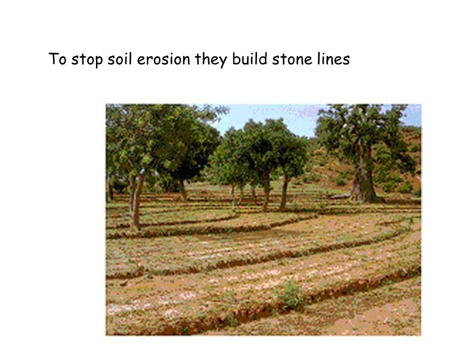 To stop soil erosion they build stone lines