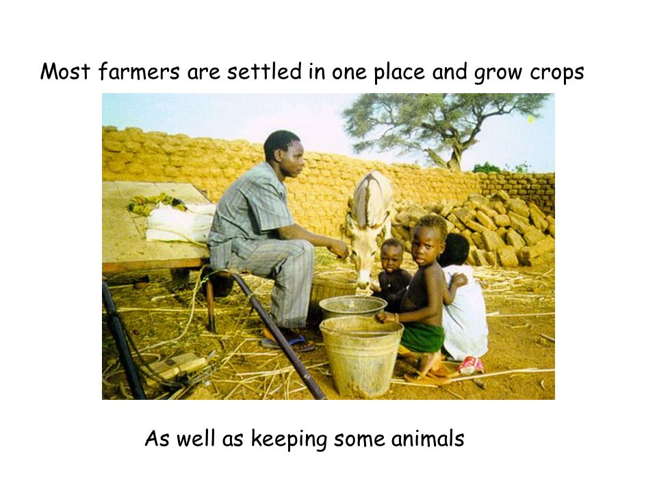 Most farmers are settled in one place and grow crops