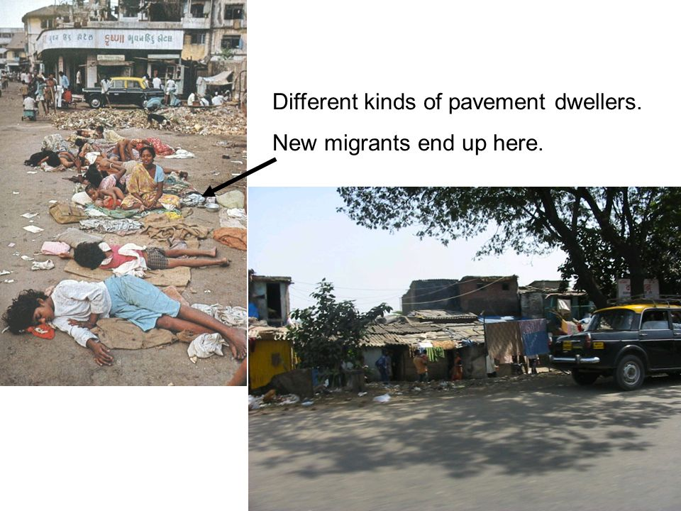 Different kinds of pavement dwellers.