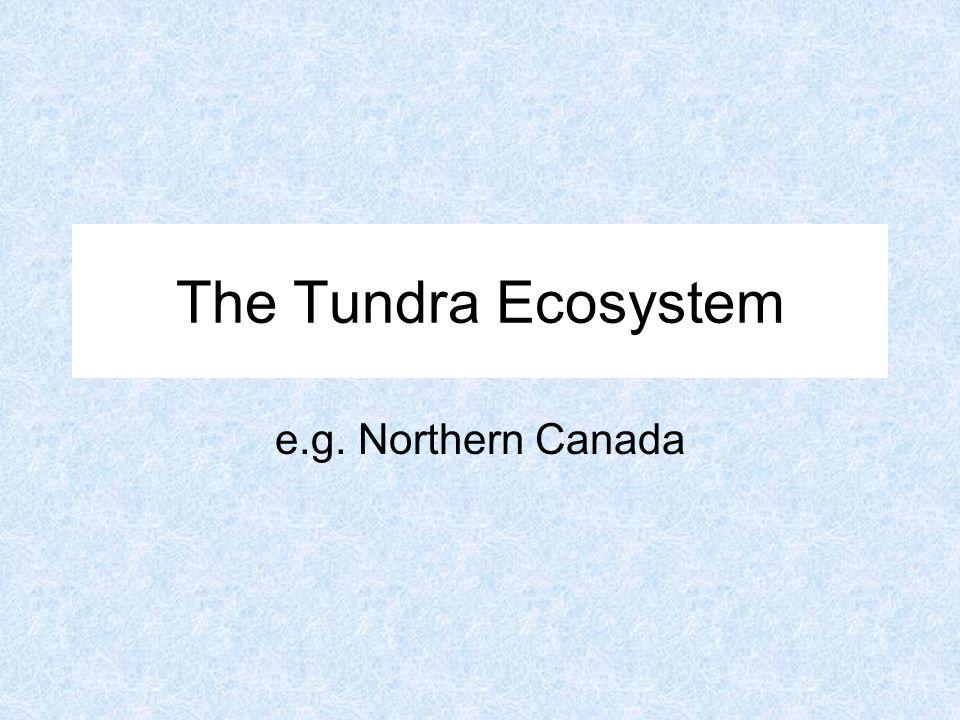 The Tundra Ecosystem e.g. Northern Canada