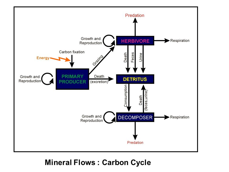 Mineral Flows : Carbon Cycle
