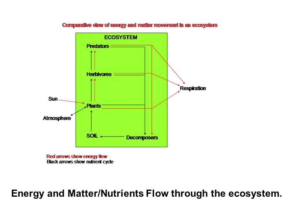 Energy and Matter/Nutrients Flow through the ecosystem.