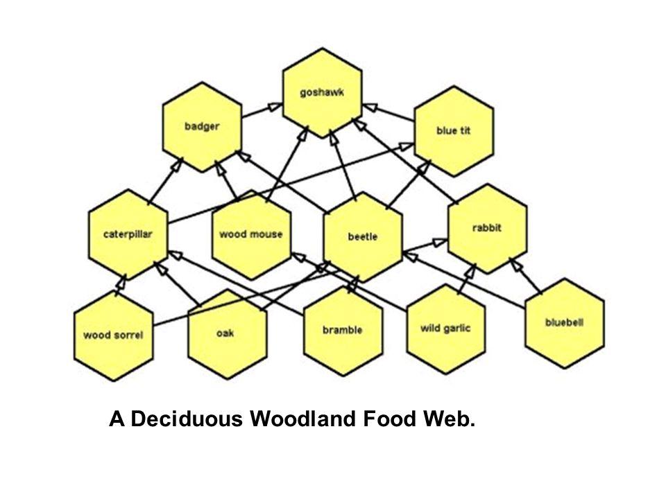 A Deciduous Woodland Food Web.