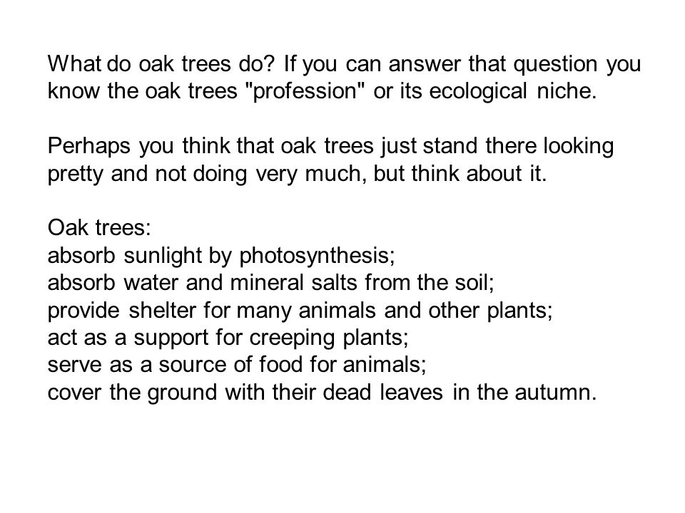 What do oak trees do If you can answer that question you know the oak trees profession or its ecological niche.
