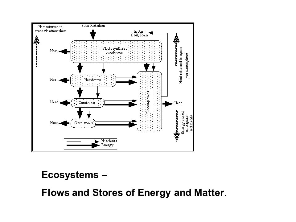 Ecosystems – Flows and Stores of Energy and Matter.