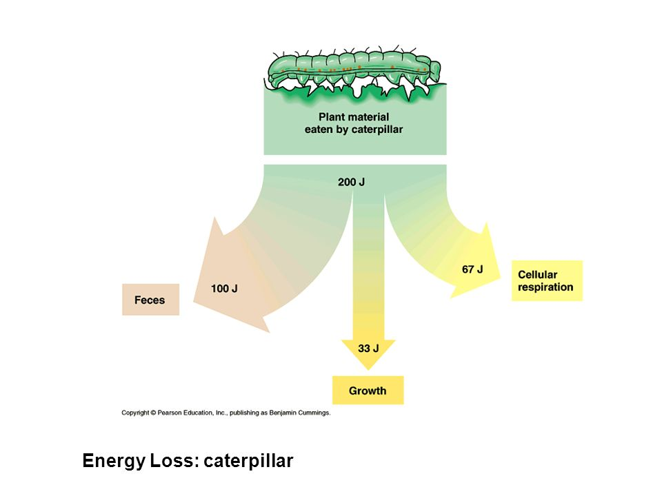 Energy Loss: caterpillar