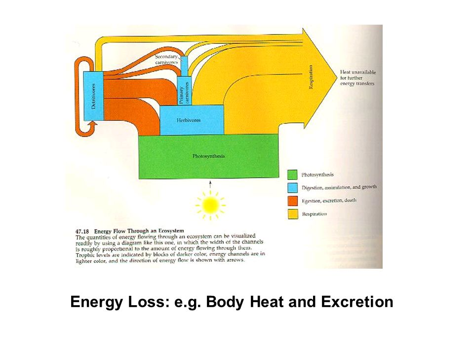 Energy Loss: e.g. Body Heat and Excretion