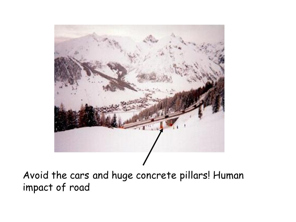 Avoid the cars and huge concrete pillars! Human impact of road