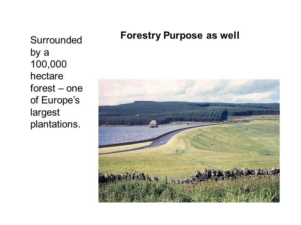 Forestry Purpose as well