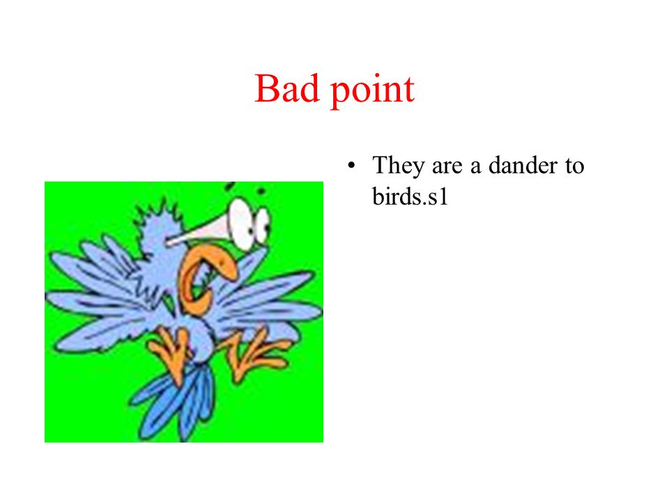 Bad point They are a dander to birds.s1