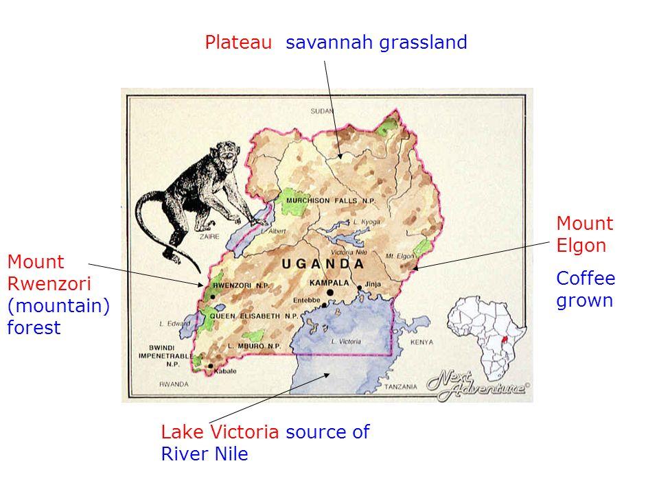 Plateau savannah grassland