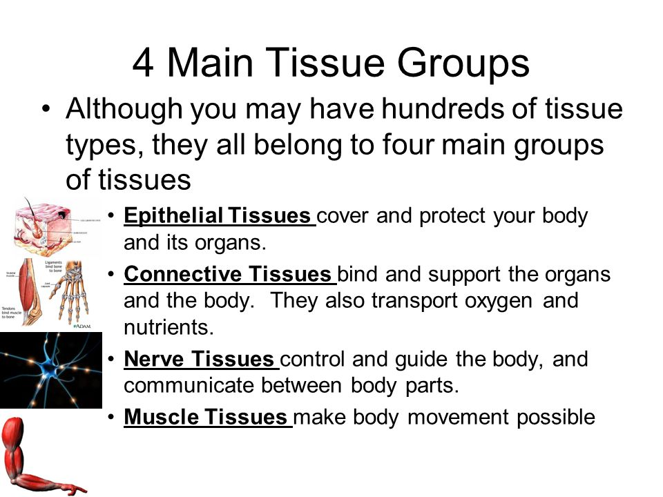 four main types of tissue There are many different types of cancer several factors  carcinomas are  tumors that appear in the tissues lining the body's organs about 80% of all  cancer.