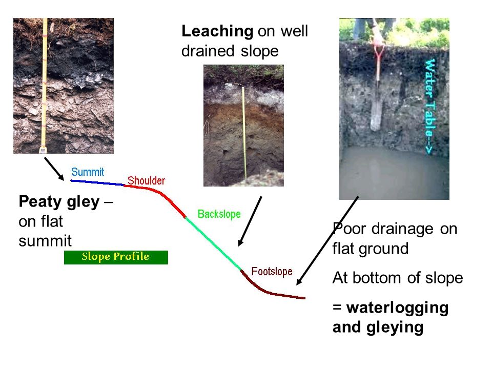 Leaching on well drained slope
