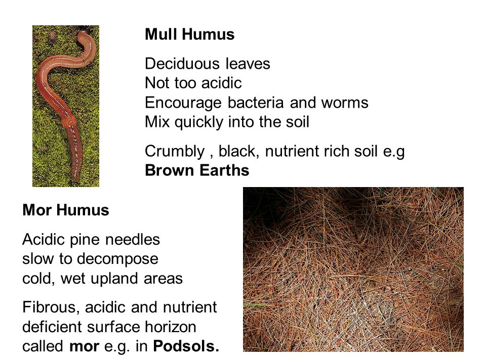 Mull Humus Deciduous leaves Not too acidic Encourage bacteria and worms Mix quickly into the soil.