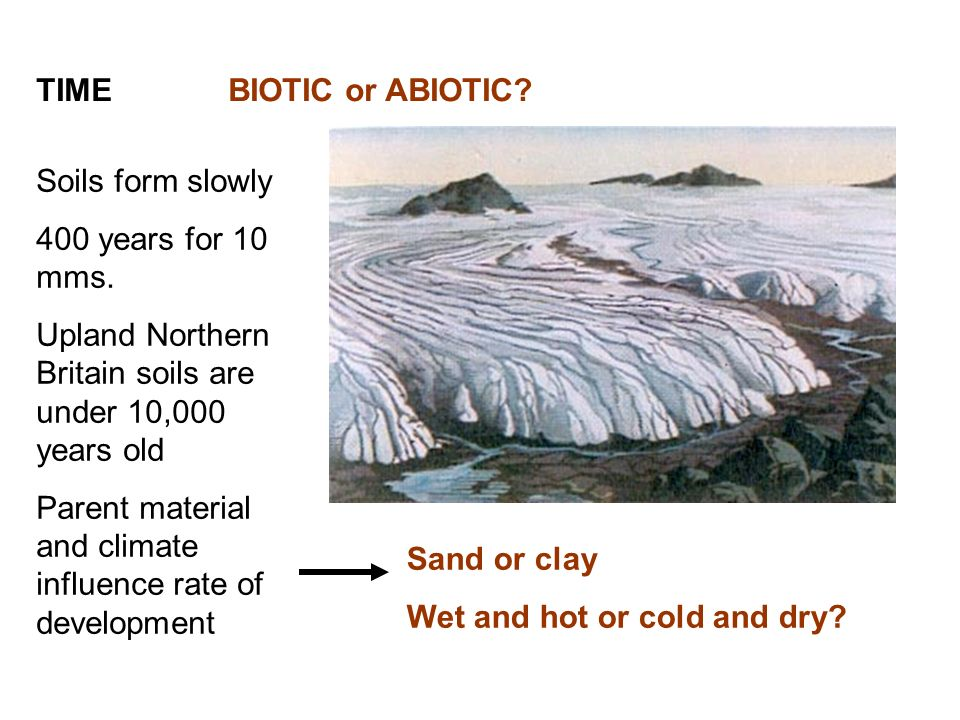TIME BIOTIC or ABIOTIC Soils form slowly. 400 years for 10 mms. Upland Northern Britain soils are under 10,000 years old.
