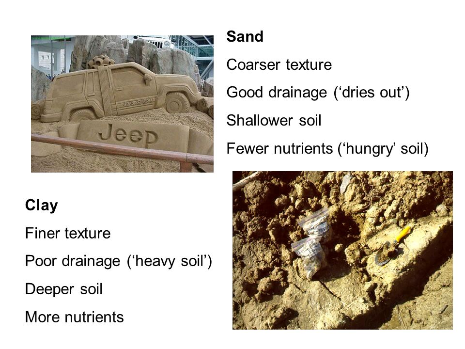 Sand Coarser texture. Good drainage ('dries out') Shallower soil. Fewer nutrients ('hungry' soil)
