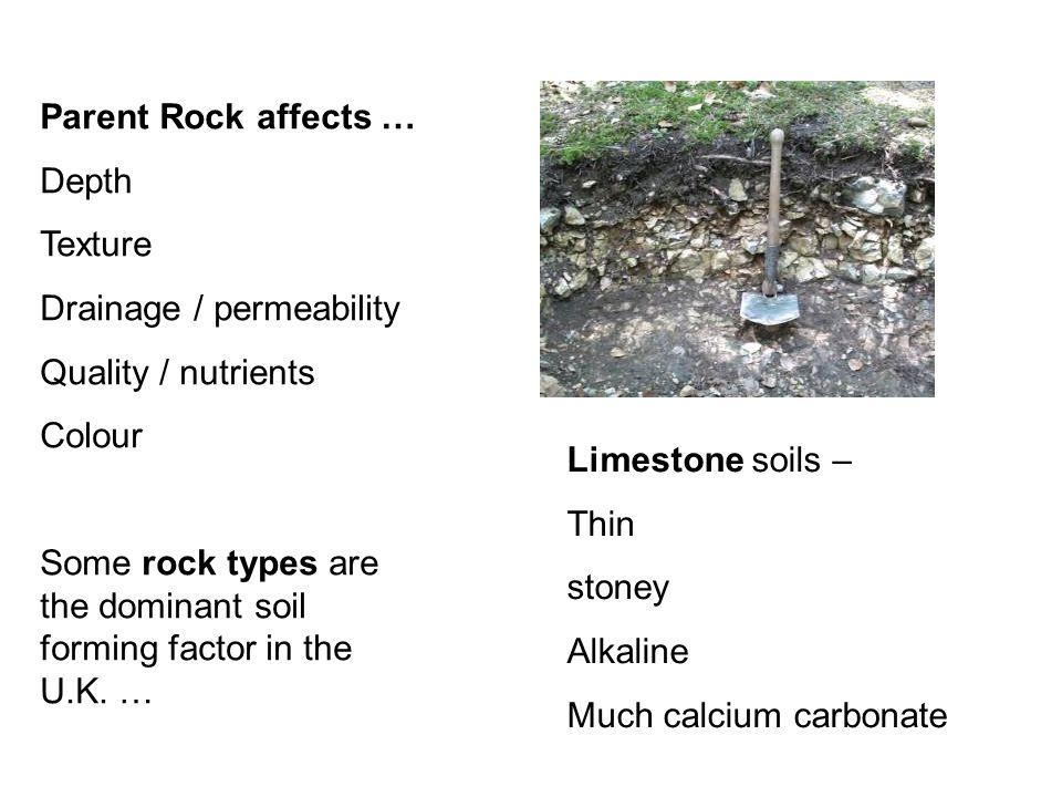 Parent Rock affects … Depth. Texture. Drainage / permeability. Quality / nutrients. Colour.