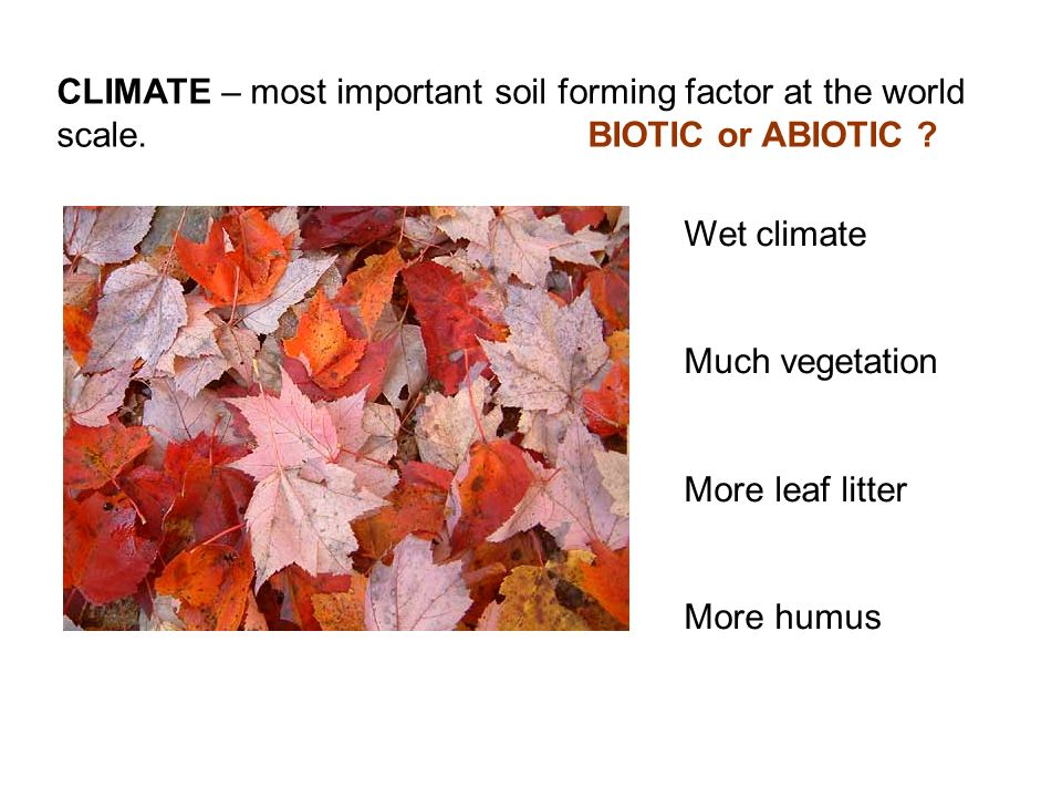 CLIMATE – most important soil forming factor at the world scale