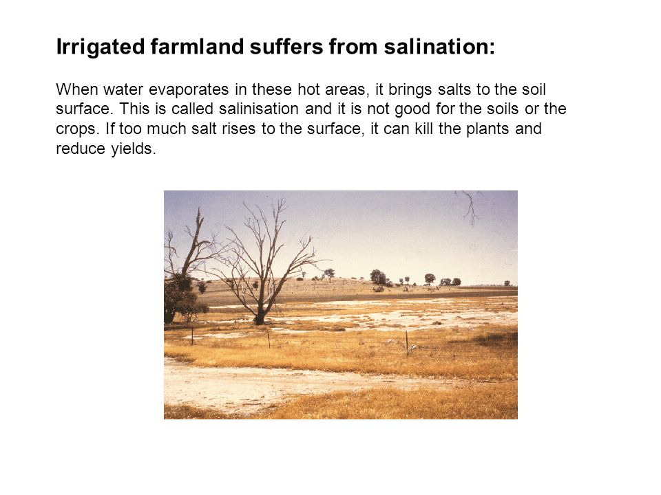 Irrigated farmland suffers from salination: