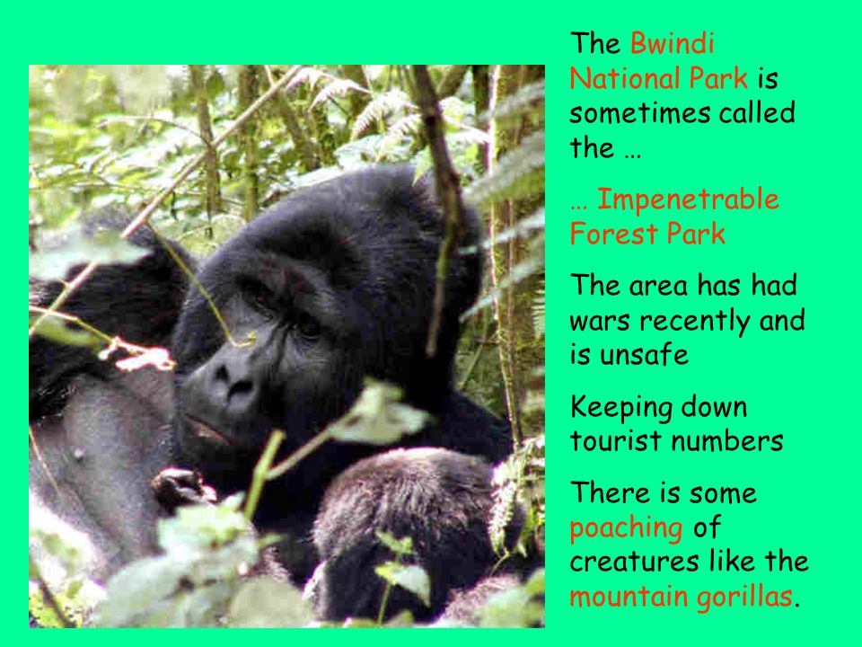 The Bwindi National Park is sometimes called the …