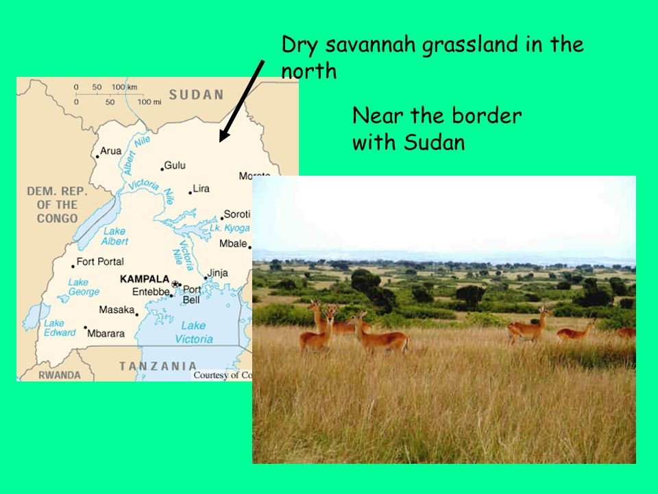 Dry savannah grassland in the north