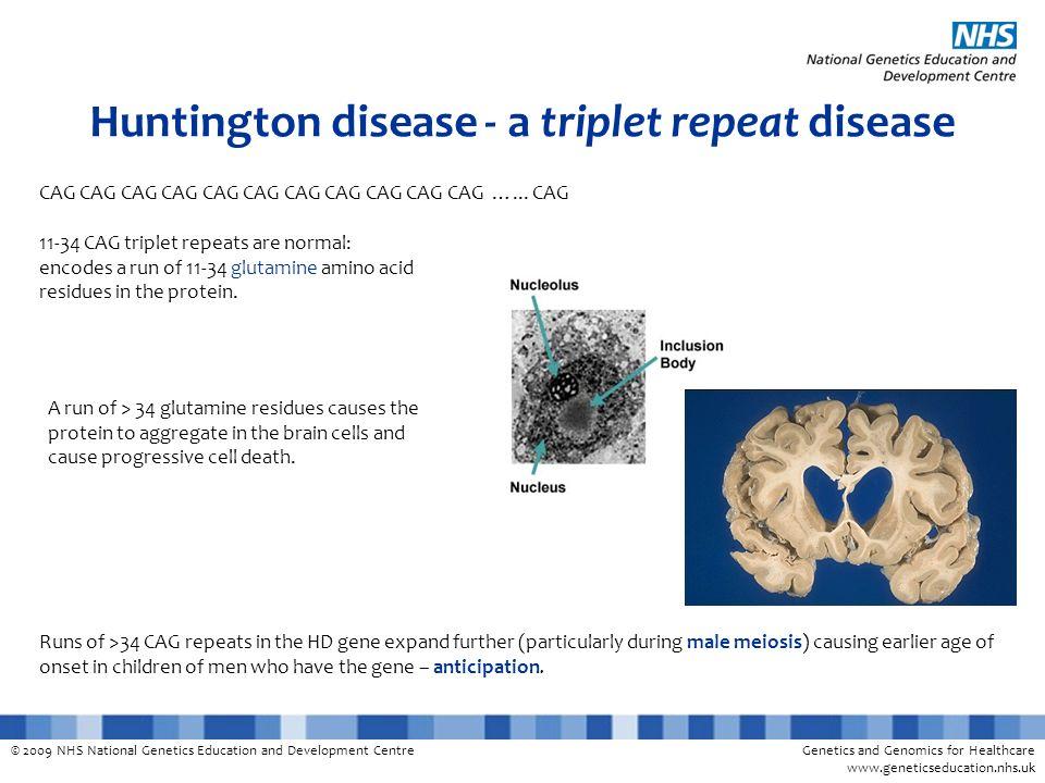 Huntington disease - a triplet repeat disease