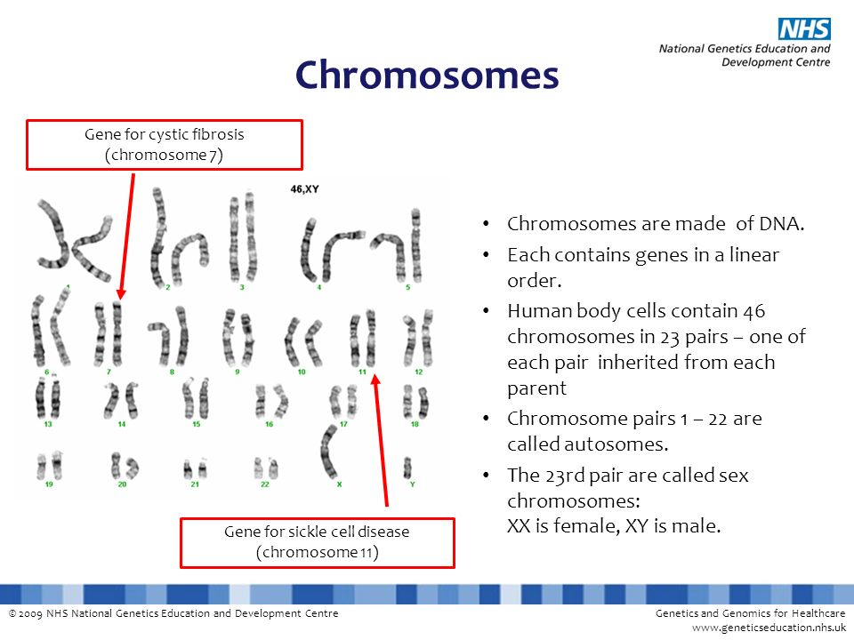 Chromosomes Chromosomes are made of DNA.