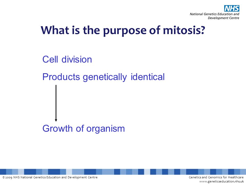 What is the purpose of mitosis