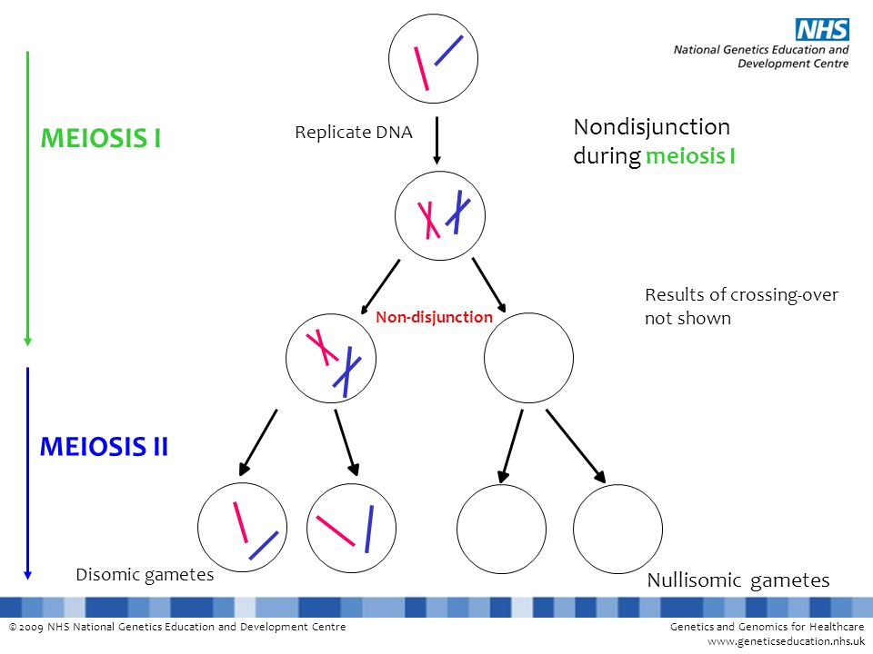 MEIOSIS I MEIOSIS II Nondisjunction during meiosis I