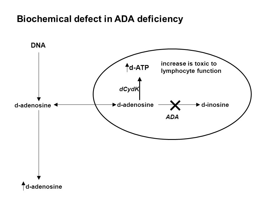 Biochemical defect in ADA deficiency