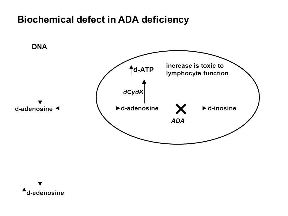 Biochemical defect in ADA deficiency